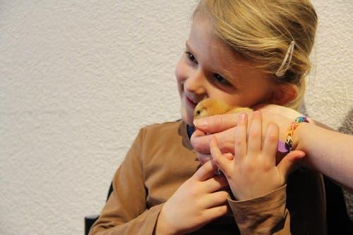 Julin geht mit dem kleinen Küken auf Tuchfühlung und will wissen, wie flauschig das Federkleid des kleinen Bibeli ist. (Bild: Ramona Geiger / luzernerzeitung.ch)