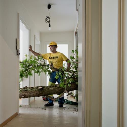 Auf dem Bild zu sehen ist ein Baum ein 18 Meter langer Baumstamm der quer in der Wohnung Platz gefunden hat. (Bild: Pius Amrein / Neue LZ)