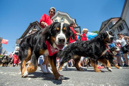 Zuchtverband fuer Schweizer Hunderassen am Zentralschweizer Jodlerfest. (Bild: Philipp Schmidli)