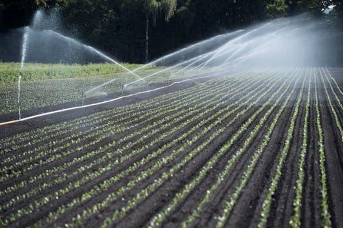 In Kerzers müssen Gemüsefelder bewässert werden. (Bild: Keystone)