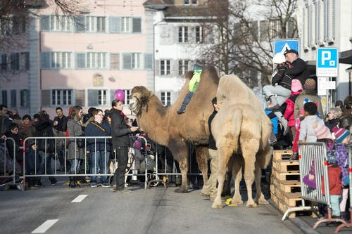 Eines der Highlights: der Kamelritt. (Bild: Maria Schmid / Neue ZZ)