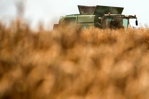 Ein Bauer mäht sein Feld, aufgenommen in Dielsdorf. (Bild: Keystone)
