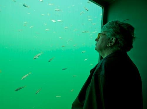 Künstler Roman Signer in seiner Skulptur «Seesicht» – fünf Meter unter Wasser. (Bild: Stefan Kaiser / Neue ZZ)