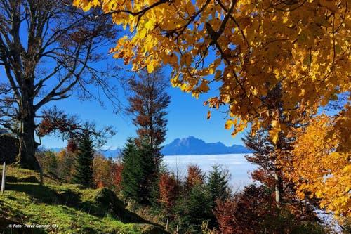 Herbststimmung über dem Nebelmeer auf der Seebodenalp (Bild: Peter Gonser)
