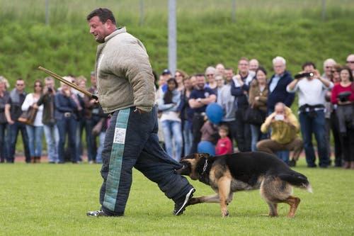 Ein Polizeihund packt im Rahmen einer Übung einen Verdächtigen. (Bild: Keystone / Anthony Anex)
