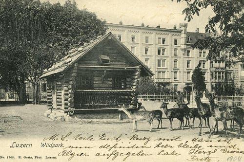 Das Vögeligärtli war um 1904 noch ein Wildpark. (Bild: PD)