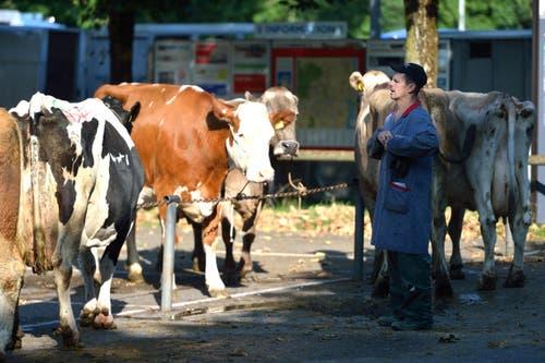 Kühe aller Art wechseln den Besitzer. (Bild: Nadia Schärli / Neue LZ)