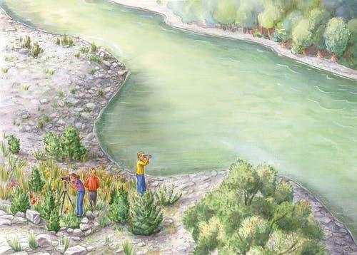 Im Gebiet von Emmen werden Uferbuchten zur Verbesserung der Lebensbedingungen für die Fische angelegt. (Bild: PD)