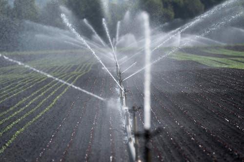 Nicht nur Pflanzen haben Durst... (Bild: Keystone)