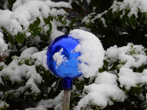 """Es ist nur eine Frage der Zeit; Noch hält sich dieser """"kleine Eisbär"""" an der Rosenkugel fest. (Bild: Leserin Margrith Imhof-Röthlin)"""
