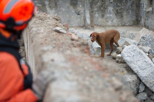 Hund Nanya wird kritisch von den Prüfern unter die Lupe genommen. (Bild: Corinne Glanzmann (Neue LZ))