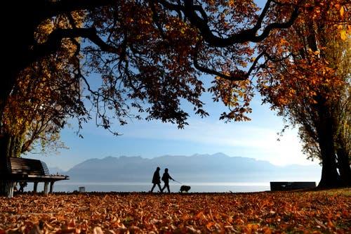 11. November: Es ist als Erlebnis durchaus angenehm, an der warmen Sonne am Genfersee zu spazieren (unser Bild). Aber nach einem trockenen Sommer folgt ein unüblich sonniger Herbst, der Wärmerekorde bricht. Das bereitet Klimaexperten Sorgen. (Bild: Keystone / Laurent Gilliéron)