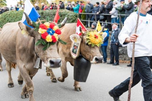Familie Hofmann vom Riedtli bringt ihr Vieh mit an den Umzug. (Bild: Roger Grütter (LZ))