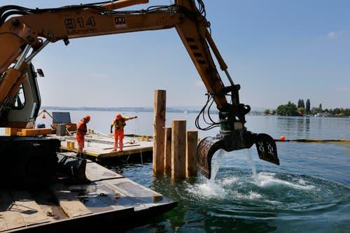 Arbeiter versenken am 18. Mai Pfähle im See, die das Fundament der Treppeninstallation stützen sollen. (Bild: Stefan Kaiser / Neue ZZ)