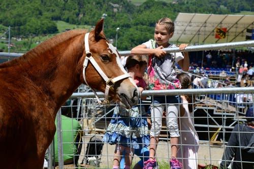 Die Mädchen bewundern das Fohlen Henry, einer der Lebendpreise. (Bild: Robert Hess / Neue OZ)