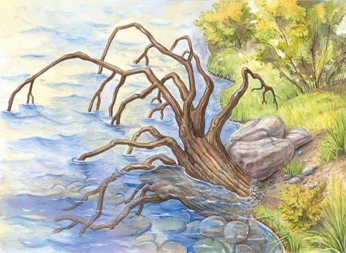 Ein Wurzelstock dient als Unterschlupf für Fische. (Bild: PD)