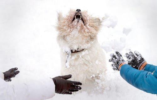 Weissrussen spielen mit einem Hund nach Schneefällen in Minsk. 20 Prozent der für den Monat Januar üblichen Niederschlagsrate fiel am 23. Januar. (Bild: EPA / Tatyana Zenkovich)