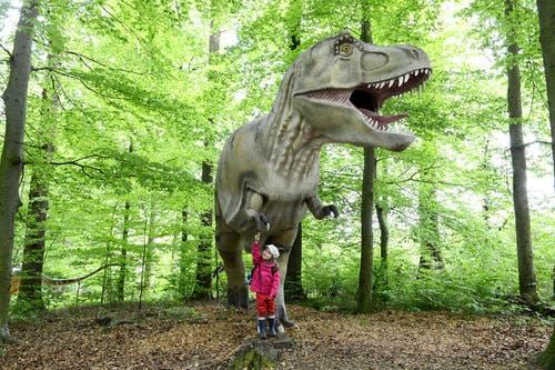 9. Mai: In Emmen sind die Dinos los: In der Austellung «Welt der Dinosaurier» sind 60 Modellen von lebensgrossen Dinosauriern und weiteren Urzeitgiganten wie Säbelzahntigern oder Mammuts zu bestaunen. Der Publikumsliebling war dabei ganz klar der rund fünf Meter hohe und 920 Kilogramm schwere Tyrannosaurus Rex (Bild). (Bild: Eveline Beerkircher / Neue LZ)