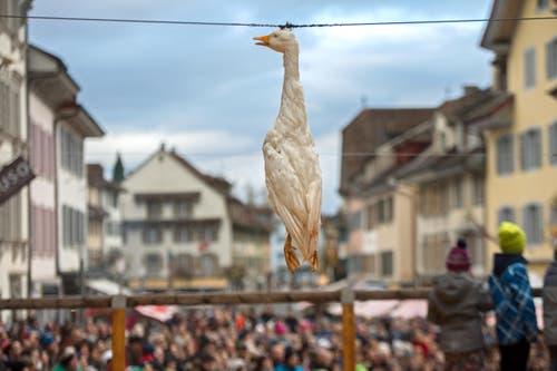 Der Gansabhauet findet jeweils am 11. November, dem Tag des Heiligen Martin, statt. (Bild: Eveline Beerkircher (Neue LZ))