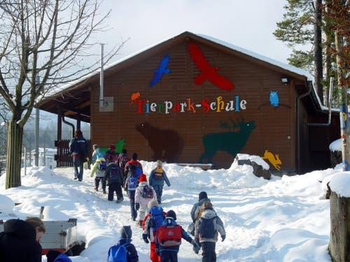 Zwei Jahre später dann wurde die Tierparkschule eröffnet, die zum wissenschaftlichen Ruf des Parks beitrug. (Bild: pd / Tierpark Goldau)