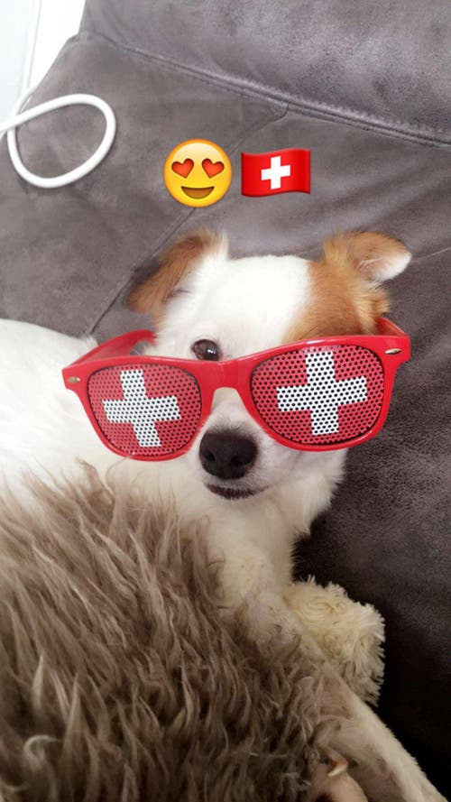 Schweizer-Hund (Bild: Céline Bünder)