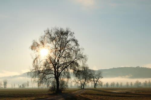 Morgenidylle im Moos (Bild: Irene Wanner)