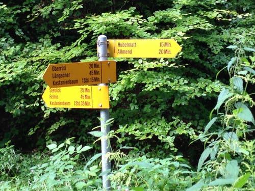 Im Wald angekommen, startet die Wanderung in Richtung Oberrüti in Horw. (Bild: Stefanie Nopper / Luzernerzeitung.ch)