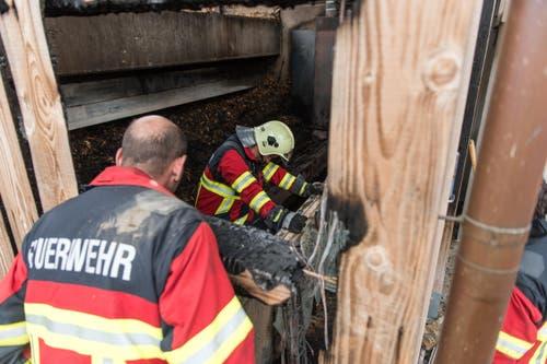 Die Feuerwehr sucht auch am Tag danach noch Glutnester. (Bild: Roger Grütter / Neue LZ)
