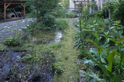 Kanton Zug: Garten des Museums für Urgeschichte(n) (Bild: Res Eichenberger/KMUZ, Zug)