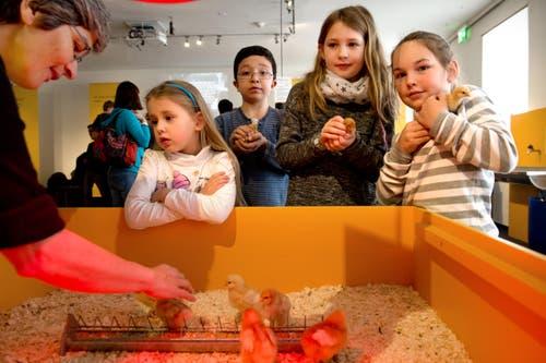 In den 11 Tagen zwischen Gründonnerstag und dem Weissen Sonntag kommen jeweils 10'000 bis 15'000 Besucher ins Museum. (Bild: Eveline Beerkircher / Neue LZ)