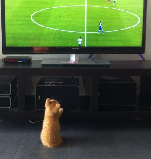 Ob unser Karlli immer noch so gespannt Fussball schaut ohne Schweizer-Beteiligung? (Bild: Nadin Bühler)