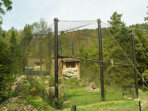 Seit 1998 werden Bartgeier im Tierpark Goldau auch gezüchtet. (Bild: pd / Tierpark Goldau)