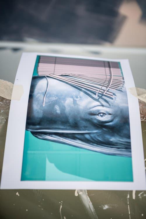 Auf dem Wandgemälde soll bald dieses Motiv zu erkennen sein. Die Botschaft: Der Wal symbolisiert die Verbindung zwischen Mensch und Natur, so Christian Rebecchi. Die Storen sollen den Wahl verstecken und gleichzeitig beschützen. (Bild: Roger Grütter)