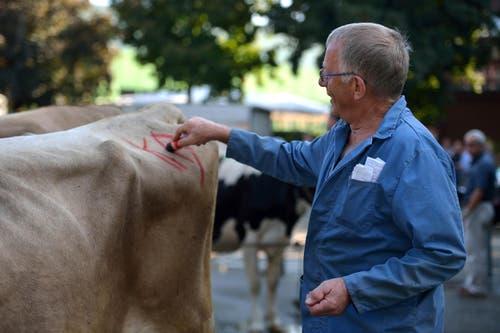 Kaspar Boog kauft und markiert sich seine Kuh. (Bild: Nadia Schärli / Neue LZ)