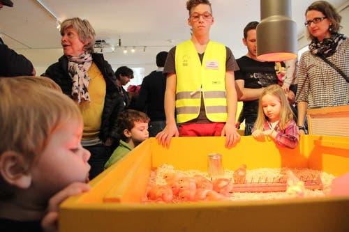 Sie ziehen kleine und grosse Besucher an: Die Bibeli im Naturmuseum in Luzern. (Bild: Ramona Geiger / luzernerzeitung.ch)