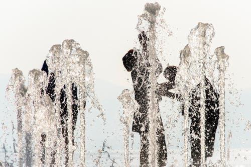 Jede Wasserquelle wird zum Anziehungspunkt.. (Bild: Keystone)