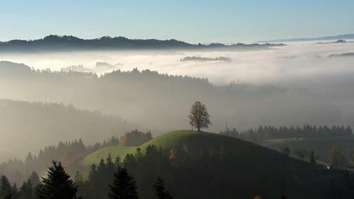 Diese fantastische Herbststimmung geniesst man zurzeit auf dem Menzberg. (Bild: Lisbeth Fischer)