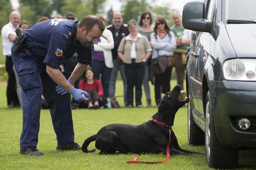 Ein Polizeihund schnüffelt ein Auto ab. (Bild: Keystone / Anthony Anex)