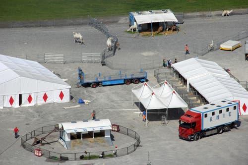 11 Uhr: Die Gehege für die Tiere stehen bereit... (Bild: René Meier / Luzernerzeitung.ch)