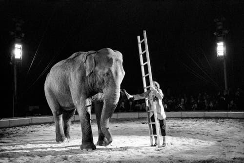 Der Besuch des Circus Knie weckte in ihm den Wunsch, Clown zu werden, 1970 stand er selber in der Manege (hier in Rapperswil-Jona). (Bild: Keystone / Str)