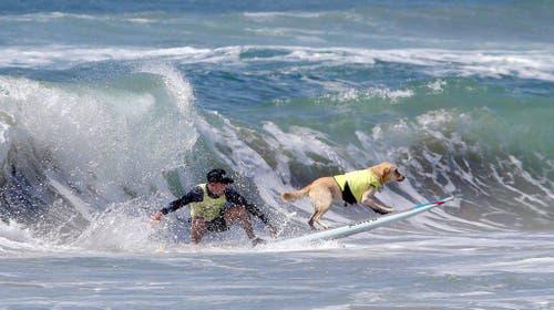 Dog surf competition in Huntington Beach (Bild: Keystone)