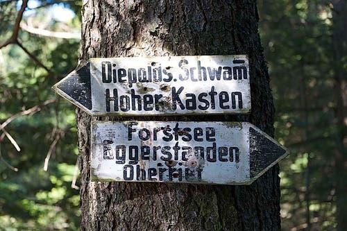 Diepoldsauer Schwamm, Oberriet (Bild: Marcel Steiner)