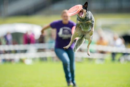 Hundefrisbee Weltmeisterschaft 2014 (Bild: Urs Bucher)