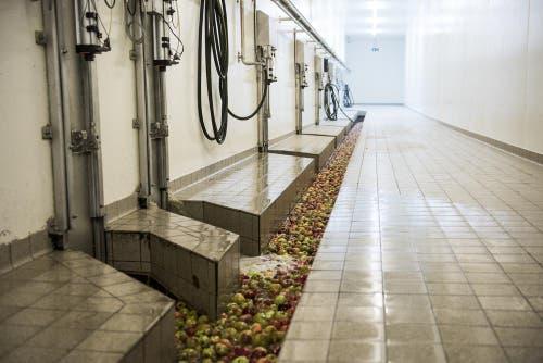 Verarbeitung der Äpfel zu Apfelsaftgetränken. (Bild: Mareycke Frehner)