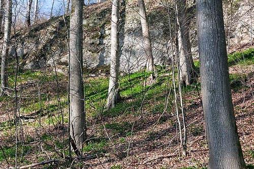 Gretschinser Holz, Wartau. (Bild: Marcel Steiner)