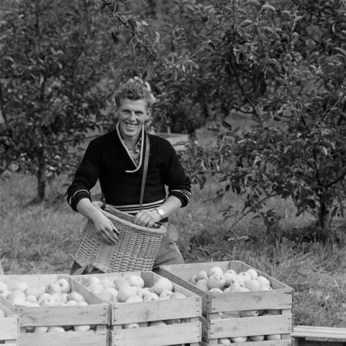 Obsternte im Thurgau, 1964. (Bild: Kurt Salvisberg)