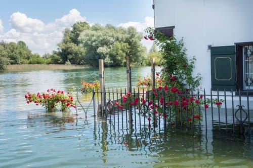 Die Auswirkungen des Hochwassers in Gottlieben. (Bild: Andrea Stalder)
