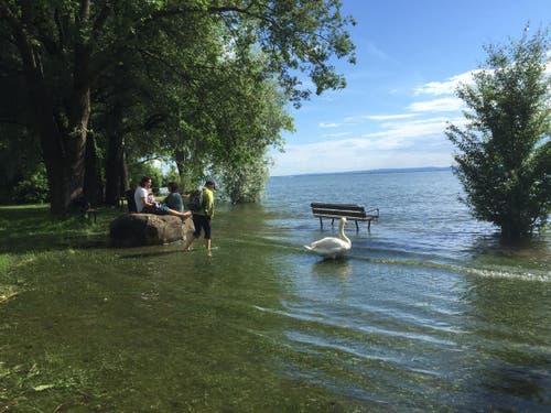 Die Badewiese von Kesswil ist überschwemmt. (Bild: Hannes Stricker)