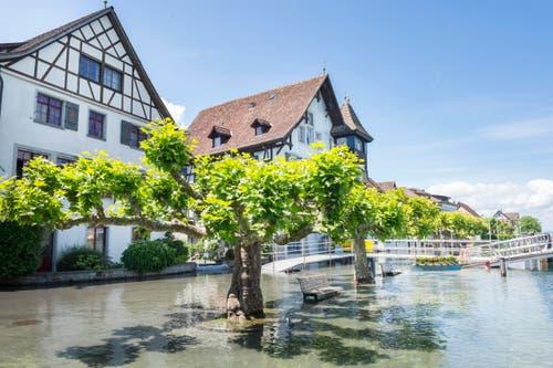 Auch in Gottlieben hat der Bodensee den Uferbereich überschwemmt. (Bild: Andrea Stalder)