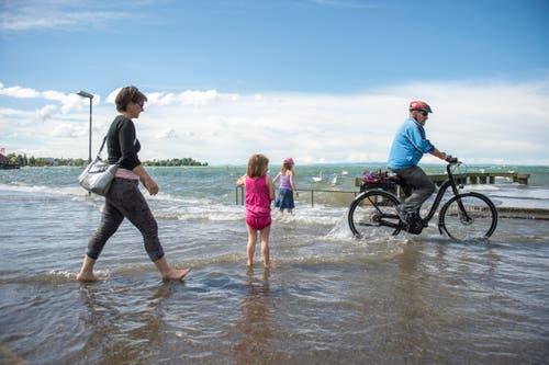 Wenn der Spaziergang und die Radfahrt am Bodensee plötzlich im See vonstatten gehen... (Bild: Urs Bucher)